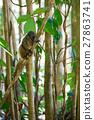 lemur, madagascar, tree 27863741