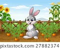 Cartoon rabbit with carrot plant in the garden 27882374