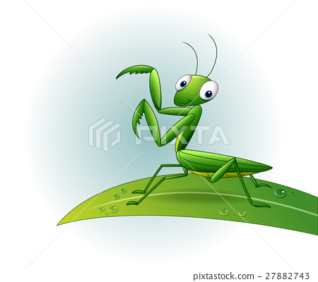 Cartoon praying mantis on leaf 27882743