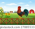 rooster, cock, cartoon 27885533