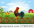 rooster, chicken, cock 27885601