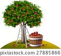 apple, fruit, tree 27885866