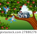 Cartoon raccoon sleep on the apple tree 27886276