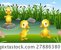 Cartoon little ducklings playing in the pond 27886380
