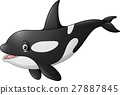 Cute orca isolated on white background 27887845