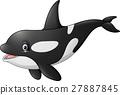 动物 逆戟鲸 矢量 27887845