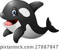 动物 逆戟鲸 矢量 27887847
