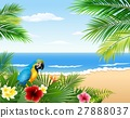 bird macaw beach 27888037