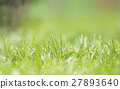 Defocused grass on field 27893640