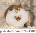 heart filled with squirrel 27894900