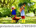 Kids picking vegetables on organic farm 27895849