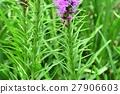 ดอกไม้ของ Reatris 27906603