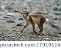 animal arctic lagopus 27910516