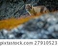 animal, arctic, cute 27910523