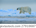 Big polar bear on drift ice with snow in Svalbard 27910687