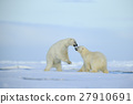 Couple polar bears fighting on drift ice with snow 27910691