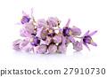 Crown flower on white background 27910730
