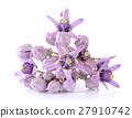 Crown flower on white background 27910742