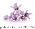 Crown flower on white background 27910757