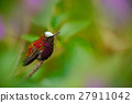 cap, hummingbird, bird 27911042