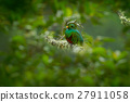 Magnificent sacred green and red bird 27911058