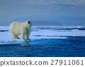 Big polar bear on drift ice edge with snow 27911061