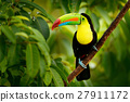 Keel-billed Toucan, Ramphastos sulfuratus, bird 27911172