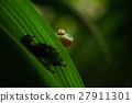 야생, 동물, 잎 27911301