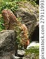 獵豹 27911993