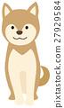 Dog Shiba Inu 27929584