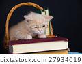 Cute business little kitten wearing glasses 27934019