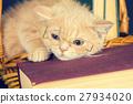Cute business little kitten wearing glasses 27934020