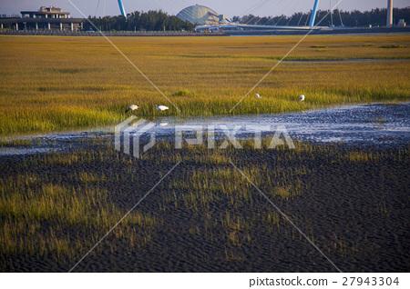 高美溼地,Taiwan, Taichung, high US wetlands,Gaomeiの湿地 27943304