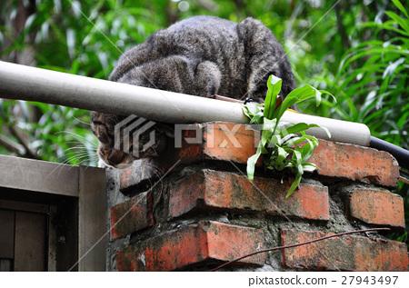 貓,牆上的貓,Cat, cat on the wall,猫、猫の壁、 27943497