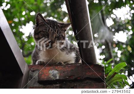 貓,牆上的貓,Cat, cat on the wall,猫、猫の壁、 27943502