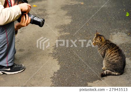 貓,Cat, ,猫、 27943513