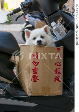 博美犬,狗,博美犬,狗,波美絲毛狗,pome 27943578