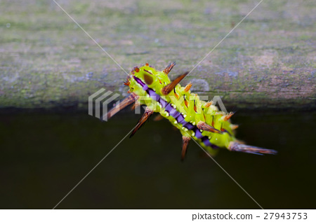 昆蟲, 毛毛蟲,Insects, caterpillars,昆虫、毛虫、 27943753