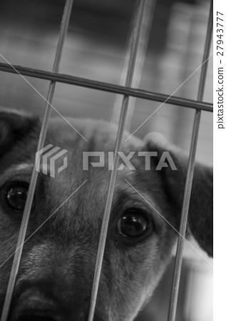 小狗,小狗,小狗,籠子,籠子,小狗,籠子, 27943777