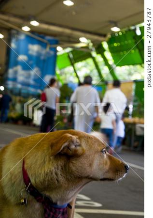 狗,寵物,家犬, Dogs, pets, domestic dogs,犬、ペット、イヌ、 27943787