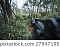 拍攝 樹林 森林 27947105