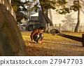 单独在区域内行走的妇女独自旅行 27947703
