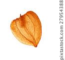 Fruit - Cape gooseberry 27954388