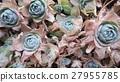 healing, lifestyle, botanic 27955785