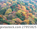 arashiyama,autumn,forest 27955825