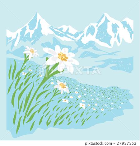 elderwise flower 27957552