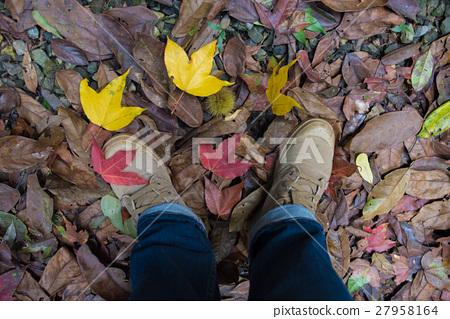 Foot of trekkers ,standing on a maple leaf. 27958164