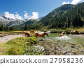 Horses in National Park of Adamello Brenta - Italy 27958236