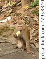 猴子 动物 水果 27958840