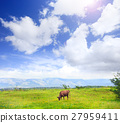 Cow grazes on meadow with green grass  27959411